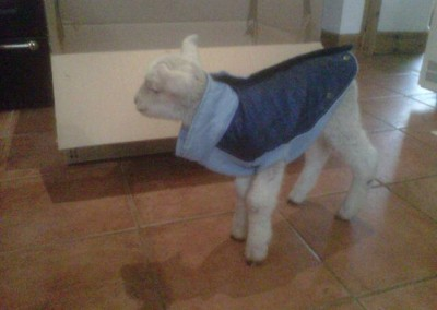 Little Dot wi her new coat - May 2014